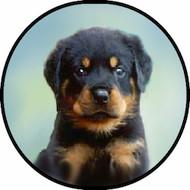 Rottweiler Pup BR