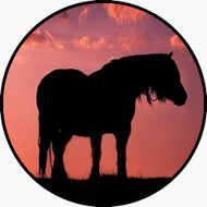 Horse at Sunset BR