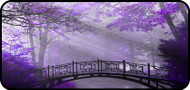 Lavender Bridge