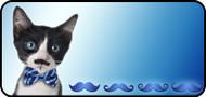 Meow Moustache