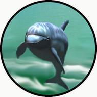 Single Dolphin BR