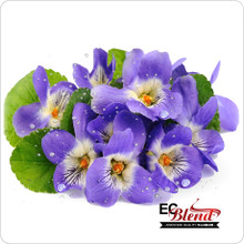 Violet Floral E-Liquid by ECBlend