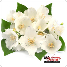 Jasmine Floral E-Liquid by ECBlend Flavors