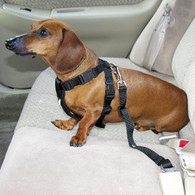 Car Harness & Seatbelt
