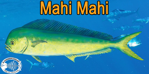 Best Knives to Fillet Mahi Mahi