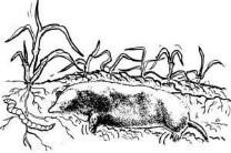 Mole Eats a Worm