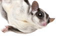 Sugar gliders LOVE live protein sources!