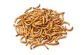 Our standard and original mealworm