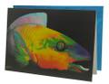Parrot Fish Card