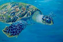 Hawksbill turtle by Sue Trew