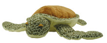 Tilli the turtle.