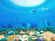 Dolphin Reef by Holly Trew