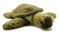 Sea Turtle, Brown Loggerhead
