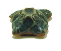 Clay Frog Magnet - Small