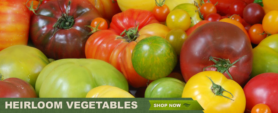 Heirloom Vegetables - Shop Now