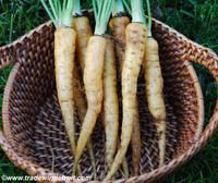 Amarillo Carrot