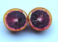 Citrus sinensis var. Moro Blood Orange - Moro Blood Orange
