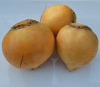 Gold Ball Turnip