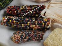 Smoke Signals Corn