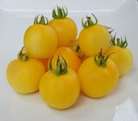 Transparent Tomato