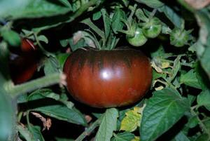 Black Giant Tomato Seeds