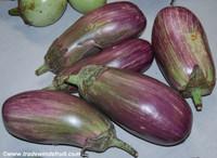 Pandora Striped Rose Eggplant
