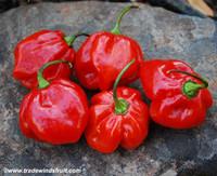 Congo Trinidad Pepper