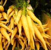 Jaune de Doubs Carrot
