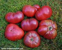 Purple Passion Tomato