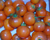 Orange Fleshed Purple Smudge Tomato