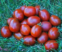 Black Moor Tomato