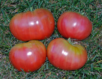 Black Star Tomato