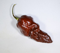 Black Naga Pepper