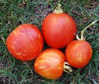 Red Striped Furry Hog Tomato