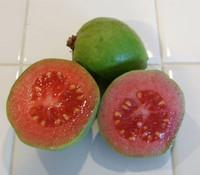 Psidium guajava - Vietnamese Guava