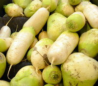 Daikon Radish, Green Meat