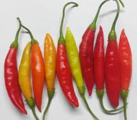 Birgit's Locoto Pepper