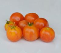 Gajo de Melon Tomato