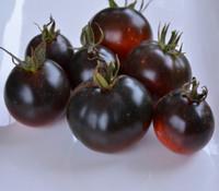 Wild Card Blues Tomato