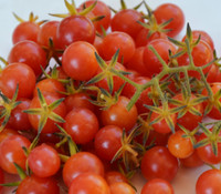 Pink Currant Tomato