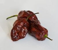 Trinidad Scorpion Moruga Chocolate Pepper