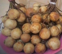 Baccaurea motleyana - Rambai