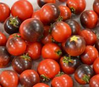 Helsing Junction Blues Tomato