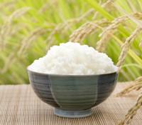 Rice, Koshihikari