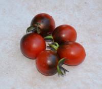 Jackie Tomato