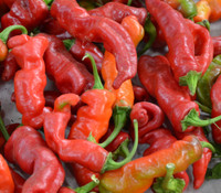 Maule's Red Hot Pepper