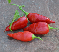 Aji Benito Pepper