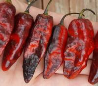 Pimenta Leopard Pepper