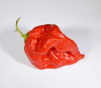Moldavian Heart x Purple Bhut Pepper