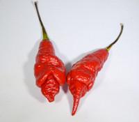 SRTSL Pepper
